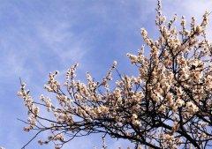 <b>野三坡旅游之春游野三坡看桃花杏花</b>